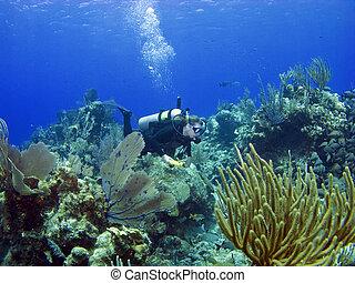 caimán, buzo, por, arrecife, isla, escafandra autónoma,...