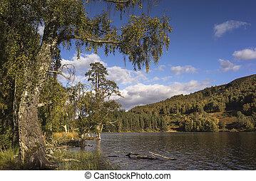 cairngorms, lago, park., pityoulish, nacional