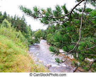 cairngorms, nacional, escocia, parque, druie, río