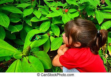 Cairns Birdwing profile side view