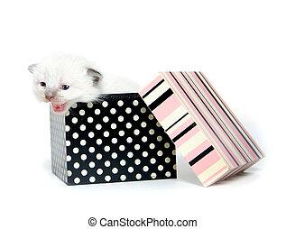 caixa, cute, gatinho