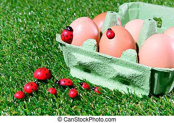 caixa, fresco, ovos, seis