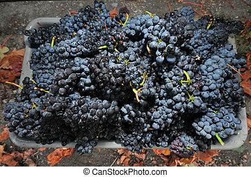 caixa, fresco, uvas, escolhido, um