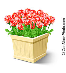 caixa, rosa, flores brancas, isolado
