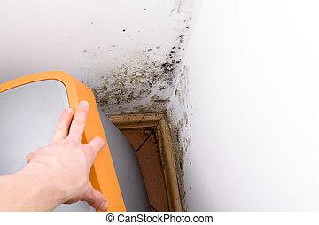 caixa, wall., fungo, atrás de, lixo, molde