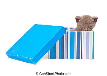 caja, con, gatito