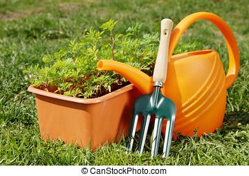 caja, jardinería, jardín, planta de semillero, Regar, lata, herramientas