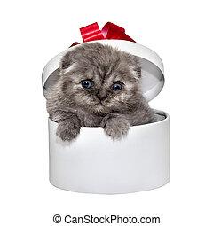 caja, regalo, casta, pliegue, gatito, blanco, escocés