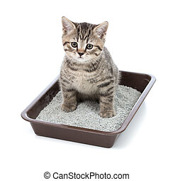 caja, servicio, poco, gato, basura, gatito, bandeja, o