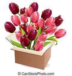 caja, tulipanes, lleno, abierto