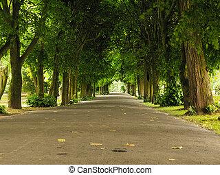 calçada, andar, pavimento, em, park., natureza, paisagem.