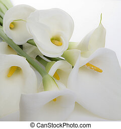 Cala Lily Bunch - Bunch of Cala Lilies in high key, soft ...
