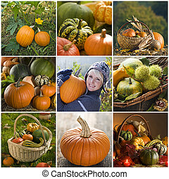 calabaza, collage