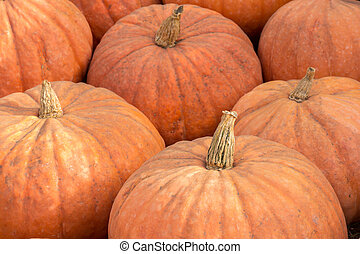 "Calabaza is ""a large winter squash that resembles a pumpkin and is typically grown in the West Indies and tropical America."