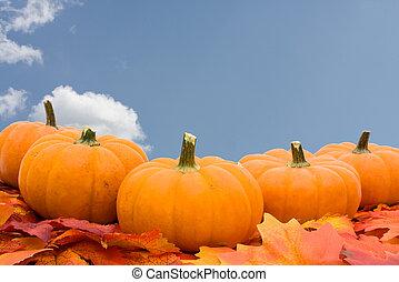 calabazas, con, permisos de otoño