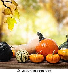 calabazas, y, calabazas, con, un, shinning, otoño, plano de fondo