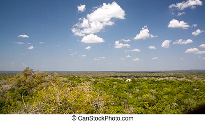 Calakmul and Jungle - Ruins of Calakmul and thick dense...