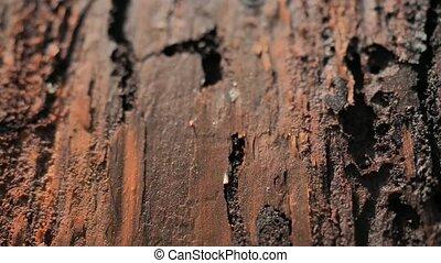 calamité, autre, séché, couloirs, woodworms, pests., ...