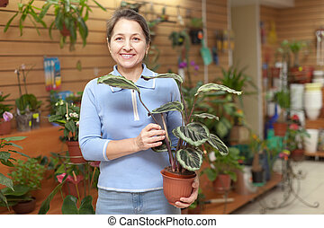 calathea, planta, florista, hembra