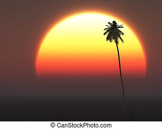 caldo, tropicale, sole