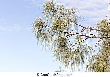 caledonia, nuevo, flora