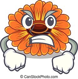calendula , θυμωμένος , λουλούδι , γουρλίτικο ζώο , ανακόπτω