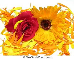 calendula, バラ, 花びら