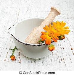 calendula, 花