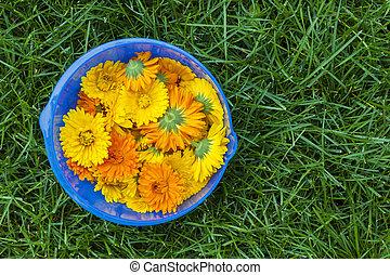 calendula, 花, ボール