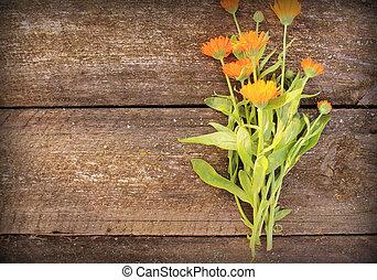 calendula, 花, 新たに, 草