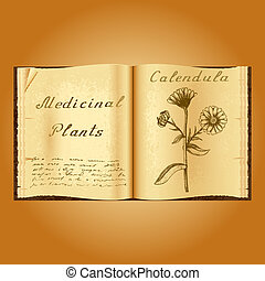 Calendula. Botanical illustration. Medical plants. Old open book herbalist. Grunge background