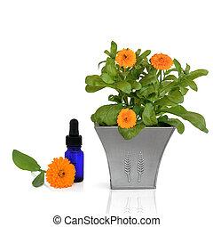 calendula, essentie, en, bloemen