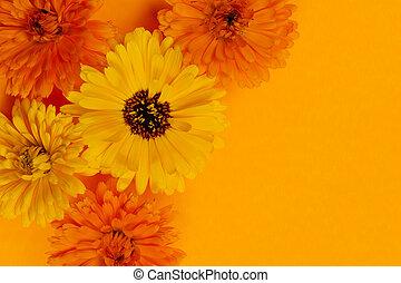 calendula, fleurs, fond