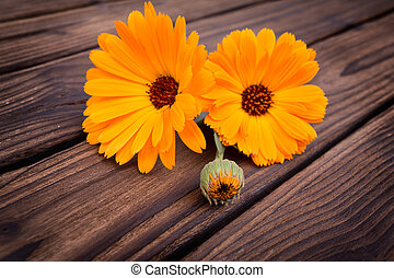 Calendula flower on wooden table