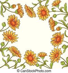calendula flower vector frame on white background