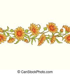 calendula flower vector pattern on white background
