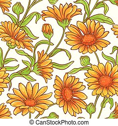 calendula flower vector pattern on white background