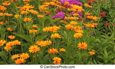 Calendula flowers in the flower-bed