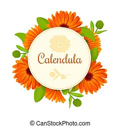 Calendula. Flowers with leaves. round badge with text