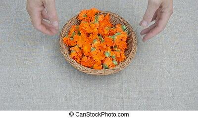 calendula medical herb blossoms