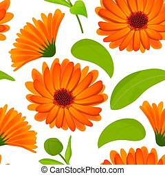 Calendula seamless pattern. Flowers with leaves isolated on white