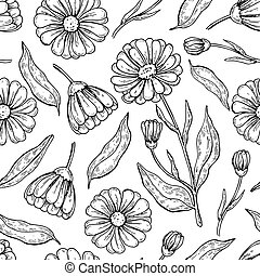 Calendula seamless pattern. Isolated medical flower and ...