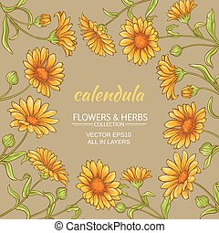 calendula flowers vector frame on color background