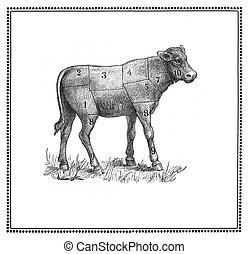 Calf chart