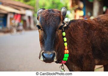Calf in the street
