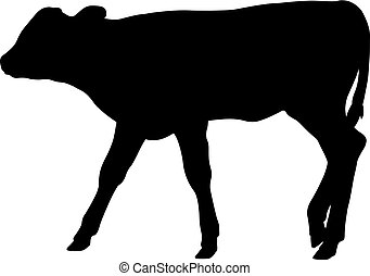 Calf silhouette isolated on white