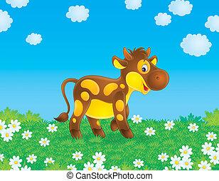 Calf - Spotty calf grazes in a field with chamomiles