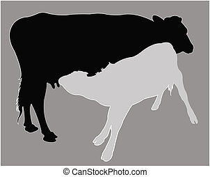 Calf suckling milk, silhouette vector