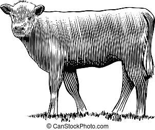 Calf - Woodcut illustration of a calf.