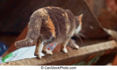 Calico cat walk away on rusty garbage dumpster